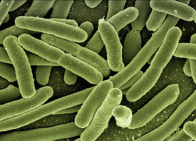 bacteria in swimming pool