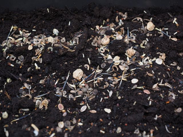 Plant seeds in fall