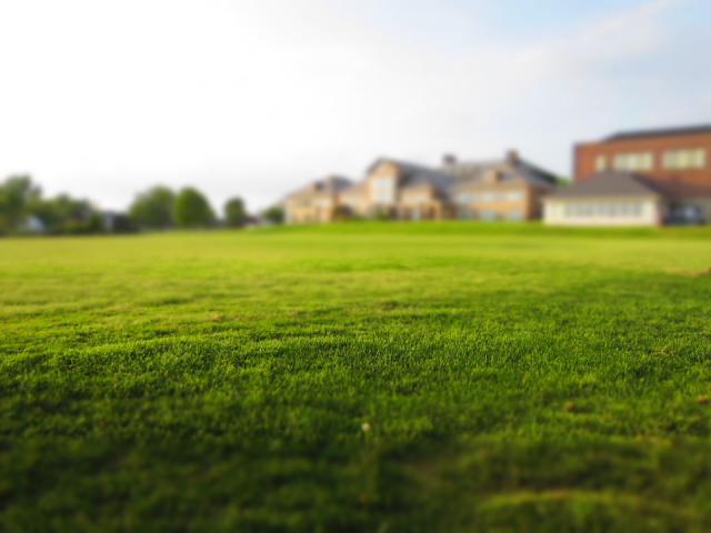 Lawn Mowed