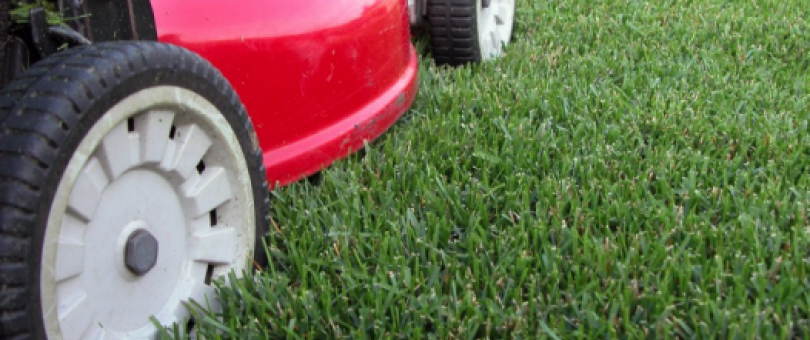 Local Lawn Mowing Companies