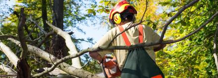 Local Tree Service Tree Removal Service Same Day Pros