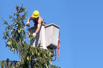 Local Tree Trimming Services Near You